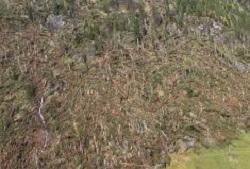 Asiago, rimane invenduto il legname proveniente dagli alberi abbattuti dal maltempo
