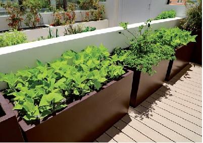 Pomodori e insalata coltivati sul balcone
