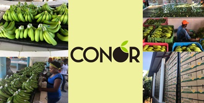 La banana Bio e Fairtrade Conor per le scuole
