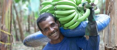 I numeri di Fairtrade International