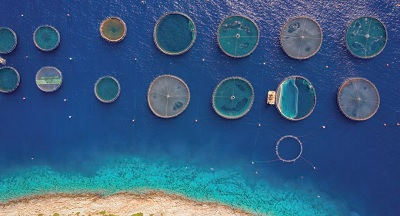 Pescato mondiale in aumento