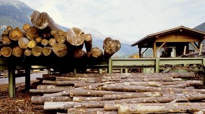 A difesa delle foreste