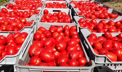 Agrofood 4.0 a Salerno