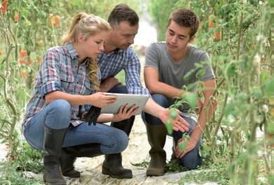 Il fascino del lavoro nei campi