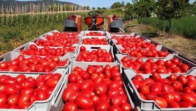 Si è insediato il Comitato Etico dell'OI Pomodoro da industria del Bacino Centro Sud Italia