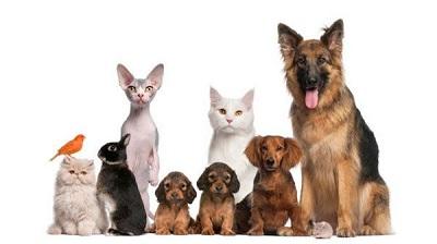 La tutela degli animali nella Costituzione