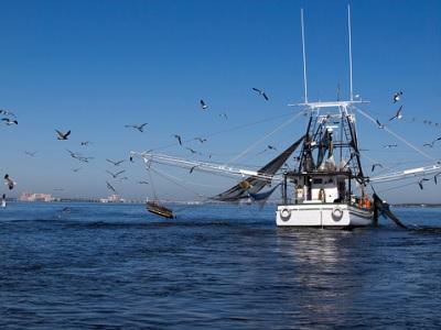 Verso un modello di pesca responsabile
