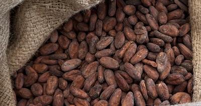 Ferrero spinge sul cacao tracciato per garantire la sostenibilità delle filiere