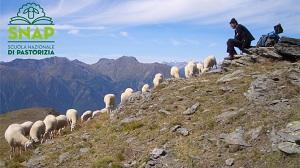 Snap, la scuola di pastorizia