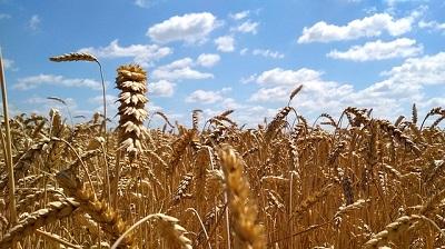 Speculazione su grano & co.