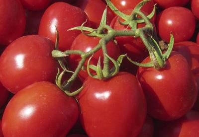 Sud, c'è l'accordo quadro sul pomodoro da industria