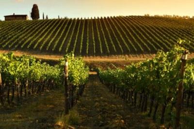 La sfida americana dei vini Prosit