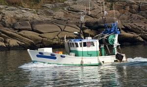 Futuro a rischio per il pesce italiano