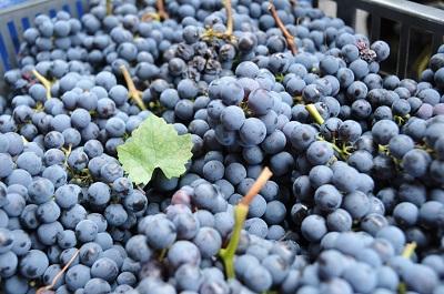 Patto di collaborazione tra Unione italiana vini e Scuola Enologica di Alba