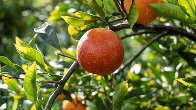 Unifrutti Group, crescita record nel 2020
