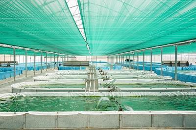 Andriani e ApuliaKundi,  un progetto di economia circolare per la coltivazionedi alga Spirulina