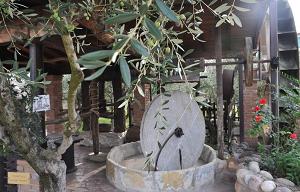 Fratelli Turri produce energia pulita dalle olive